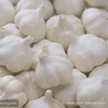 Supply Garlic New Season - prix pas cher