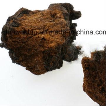 Diabetes Gesundheit Lebensmittel Phaeoporus Obliquus Chaga Mushroom Powder