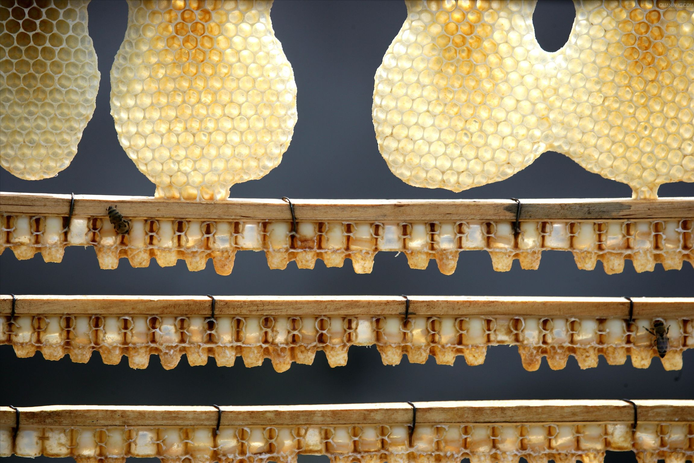 Crop Royal Jelly