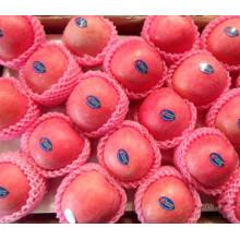 Haute qualité pour l'exportation de pommes fraîches FUJI