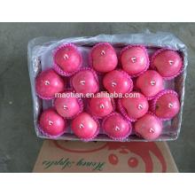 fresh sugar apple for sale