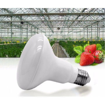 Svamplampa 12w LED Grow Light