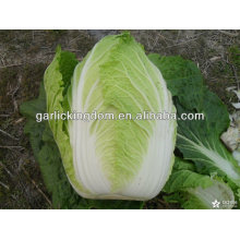 sell new crop Fresh Chinese Cabbage brother kingdom