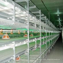Équipements de volaille poulet Cage de haute qualité pour poulets de chair