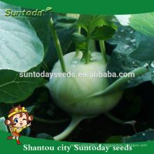 Suntoday comprar sementes de jardim on-line heirloom híbrido vegetal verde F1 catálogo de sementes de couve-rábano orgânico (22001)