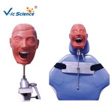 Medical Dental Phantom Head Model For Hospital School