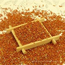 Melhor painço vermelho puro em casca, origem chinesa