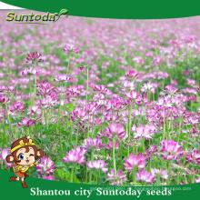 Suntoday uso de hierbas japonesas como fertilizante para semillas de lechugas de leche china orgánica de frutas vegetales de arroz (81006)