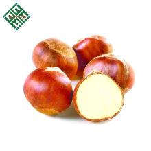 chinesische frische Kastanie Top-Qualität Großhandelspreis