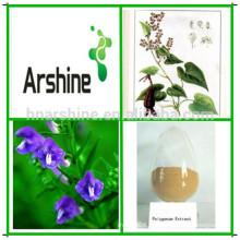 Medicina natural da erva Falopia multiflora