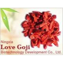 Échantillon gratuit 750granule / 50g Goji Berry avec le meilleur prix