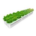 Hidroponia automática para plantas