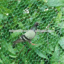 Handle Pet Bird Captura de red