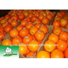 Juicy Navel Orange im Karton