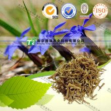 Reines natürliches Chinensis Benth Radix Gentianae Calamintha