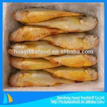 High Quality Frozen Yellow Croaker