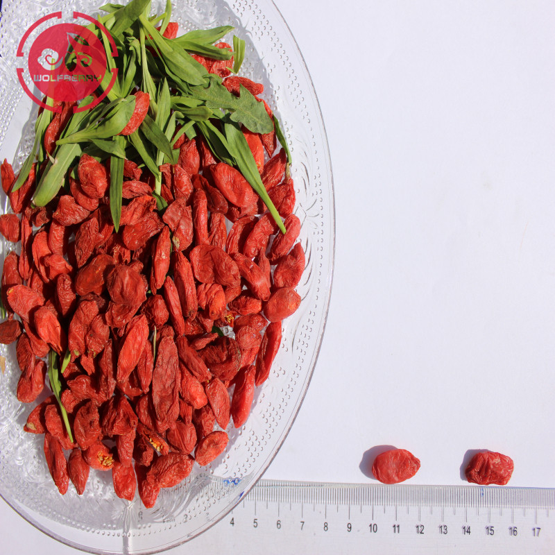 Jagoda Goji / Wolfberry / New crop organic goji berry