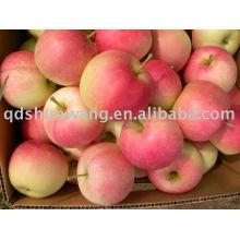 Class A gala apple