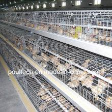 Poul Tech Pullet Chicken Cage (Ein Rahmen)