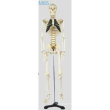 Modelo de Skelecton Médio (MSSNM85)