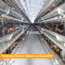 Tianrui H Type Chicken Cage for Poultry