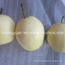 Fornecedor chinês profissional de pêra fresca Ya