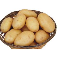 High quality fresh potato prices export potato fresh potato price per ton