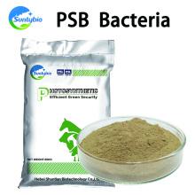 Nourrir les bactéries photosynthétiques pour la volaille et le bétail
