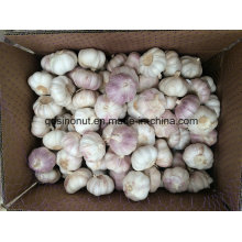 Chinese New Cold Normal White Garlic 5.0cm&up