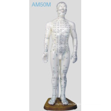 Acupuncture Human Model (AM50M)