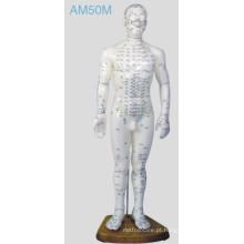 Acupuntura modelo humano (AM50M)