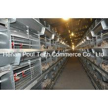 Hochwertiges automatisches Pullet Chicken Cage System (H Typ)
