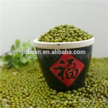 Feijões de mung verde orgânicos para venda