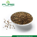 High Purity Hemp Seed
