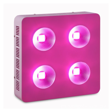 800W COB LED Grow Light para vegetales y plantas frutales
