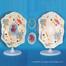 Schule Versorgung Lehre Verwendung Tier Zelle Vergrößertes Mikrostruktur Modell (R180109)