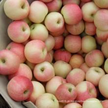 Gala vermelha fresca Apple qualidade superior do fornecedor dourado