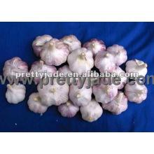 garlic supplier from china