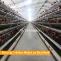 A Type Galvanized Automatic Poultry Raising Equipment for Layer