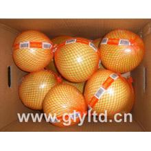 Frischer Honig Pomelo 2015 Crop hohe Qualität