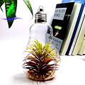 Crystal Bulb Shape Air Plant Glass Terrarium