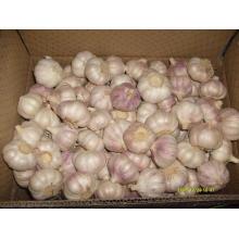 Carton Packing Normal White Garlic (5.0cm and up)