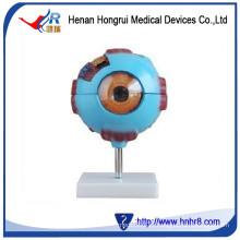 Модель гигантского глаза HR-316
