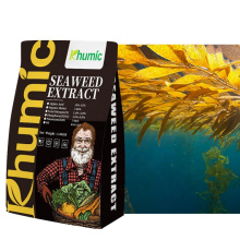 Pure ascophyllum nodosum sea weed extract Khumic seaweed organic extract
