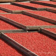 Baies rouges de Goji séchées en vrac de gros organique certifié