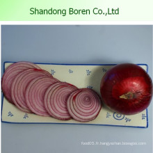 L'oignon frais d'oranges fraîches au prix le plus bas de Chine
