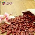 2015 New crop Pequeno feijão vermelho na venda quente