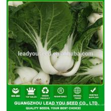 Fábrica de semillas de col china NCC02 Xiami, semillas pak choi