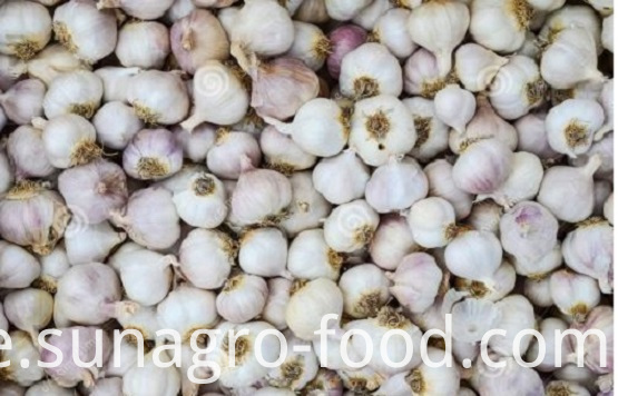 Jinxiang garlic