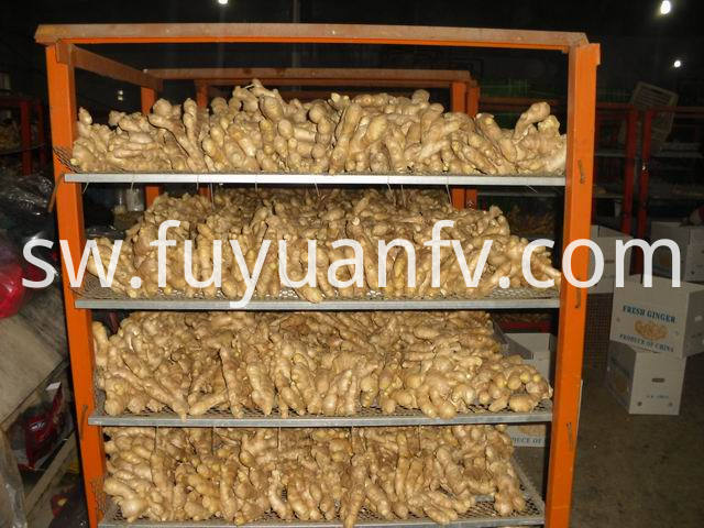 air dried ginger (70)